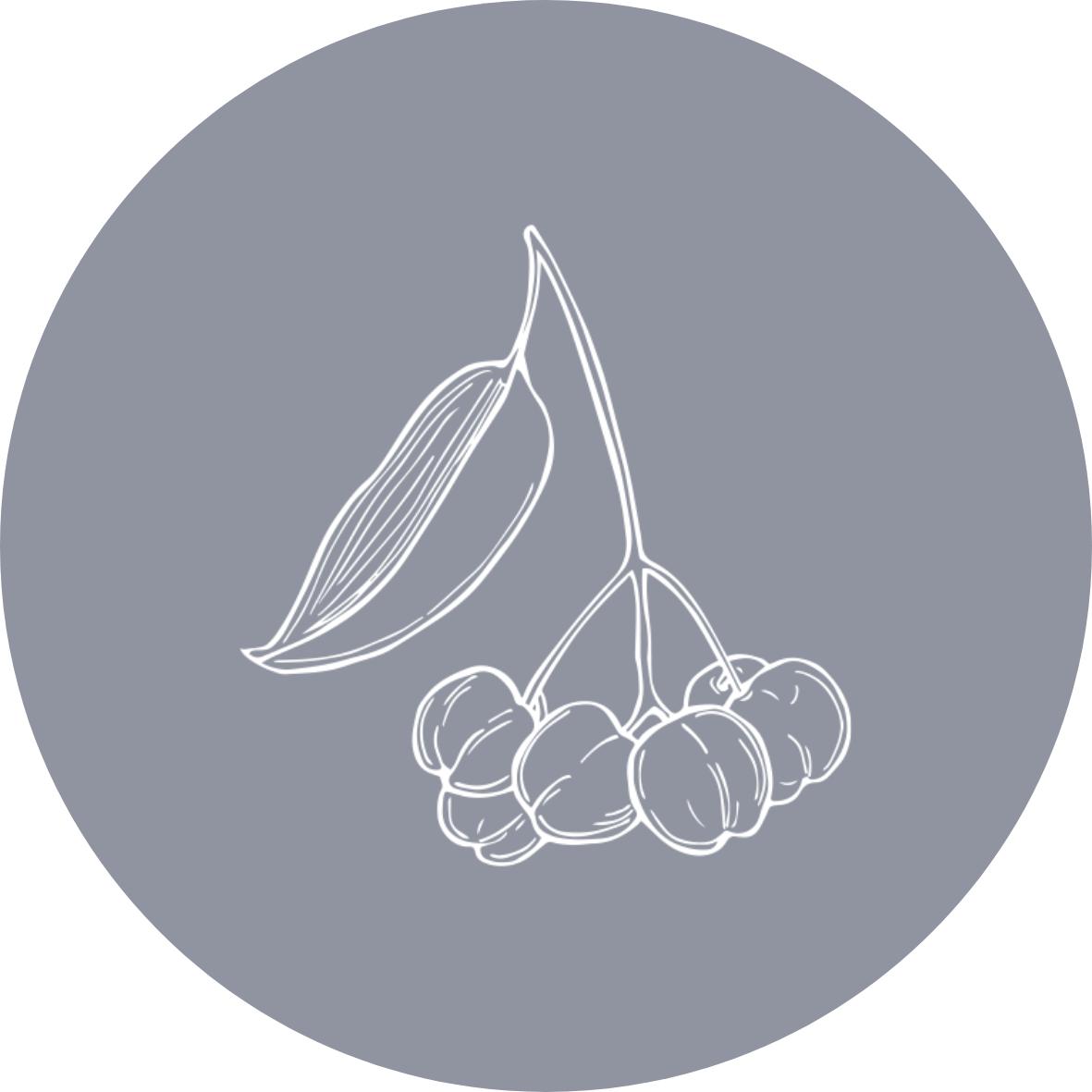Clean by endota Wild Orange & Geranium scent